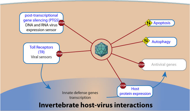 Virus and Host Interaction